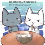 年越し蕎麦 猫